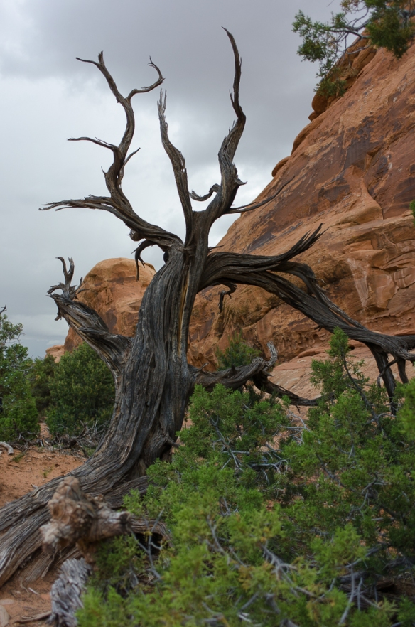 Arches National Park Tree