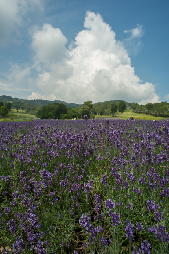 Tanbara Lavender Clouds